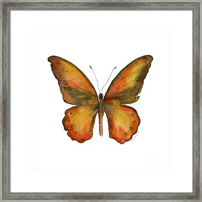 85 Lydius Butterfly Framed Print