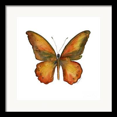 Orange And Brown Wings Framed Prints