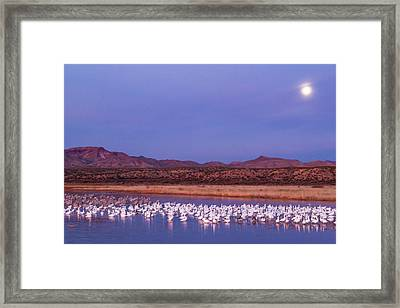 Usa, New Mexico, Bosque Del Apache Framed Print by Jaynes Gallery