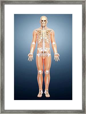 Male Skeleton Framed Print by Pixologicstudio/science Photo Library