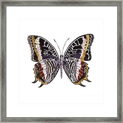 88 Castor Butterfly Framed Print