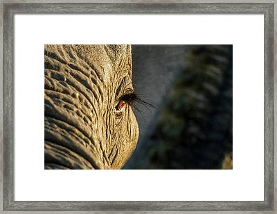 Africa, Botswana, Moremi Game Reserve Framed Print by Paul Souders