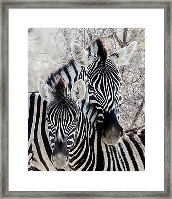 Africa, Namibia, Etosha National Park Framed Print by Jaynes Gallery