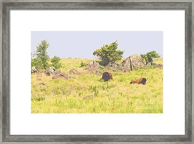 American Bison Framed Print by Mickey Harkins