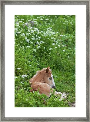 Bulgaria, Central Mountains Framed Print by Walter Bibikow