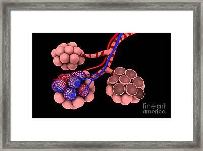 Conceptual Image Of Alveoli Framed Print by Stocktrek Images