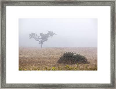 Cork Tree In Alentejo Framed Print by Andre Goncalves