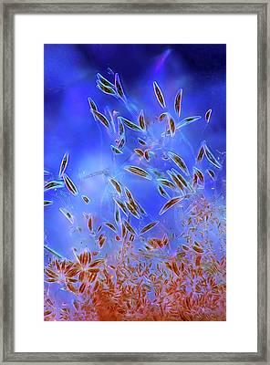 Diatoms Framed Print by Marek Mis/science Photo Library