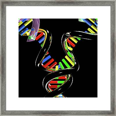 Dna Replication Framed Print by Russell Kightley
