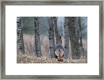 Eastern Wild Turkey Framed Print by Linda Freshwaters Arndt