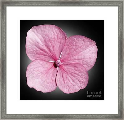 Flowers Framed Print by Tony Cordoza