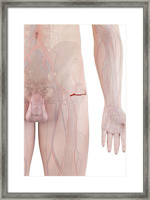 Human Artery Framed Print by Sciepro