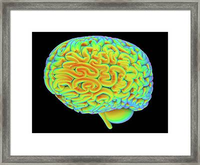 Human Brain Framed Print by Alfred Pasieka
