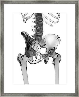 Human Pelvis Bones Framed Print by Sciepro