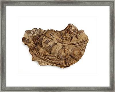 Ichthyosaur Fossil Framed Print