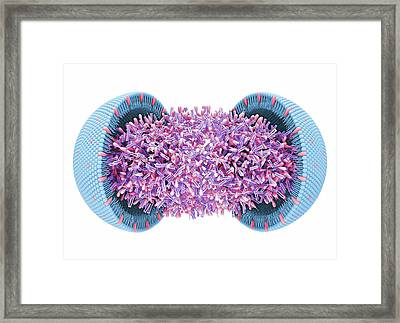 Lipoprotein Framed Print by Maurizio De Angelis