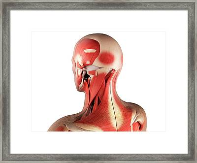 Male Musculature, Artwork Framed Print by Sciepro
