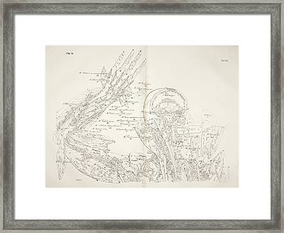 Muscular System Framed Print by British Library