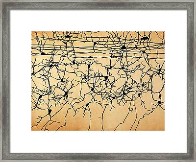 Nerve Cells Framed Print by Juan Gaertner