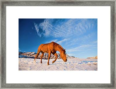 North America, Usa, Wyoming, Shell Framed Print