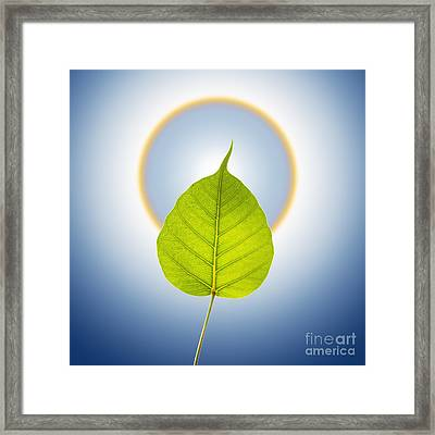 Pho Or Bodhi Framed Print