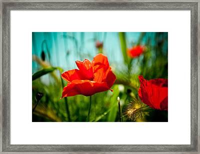 Poppy Field And Sky Framed Print by Raimond Klavins