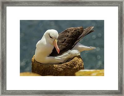 South America, Falkland Islands Framed Print