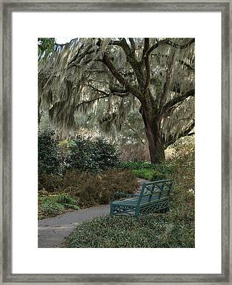Spanish Moss Framed Print by Jeffery Akerson