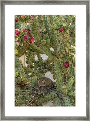 Usa, Arizona, Sonoran Desert Framed Print