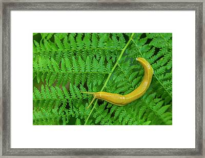 Usa, California, Redwoods National Park Framed Print