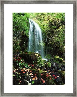 Usa, Oregon, Mt Hood National Forest Framed Print
