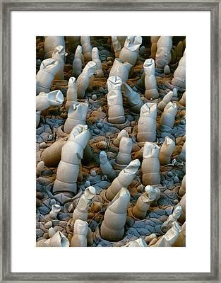 Water Lettuce Trichomes Framed Print by Stefan Diller