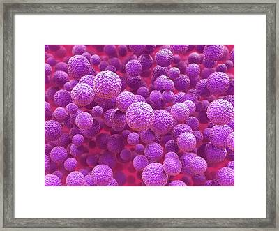 Zika Virus Particles Framed Print by Maurizio De Angelis