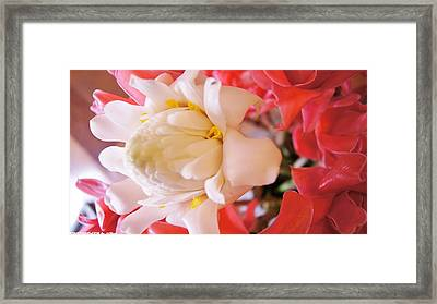 Flower For You  Framed Print by Gornganogphatchara Kalapun