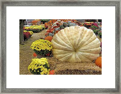 917 Pound Pumpkin Framed Print by Janice Drew