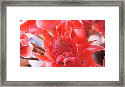 Flower For You  Framed Print by Gornganogphatchara Kalapun