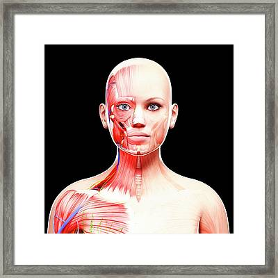 Female Anatomy Framed Print by Pixologicstudio/science Photo Library