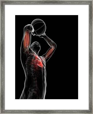 Male Anatomy Framed Print by Sciepro/science Photo Library
