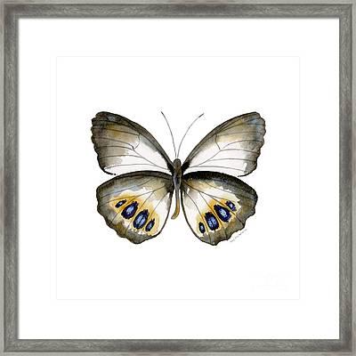 95 Palmfly Butterfly Framed Print