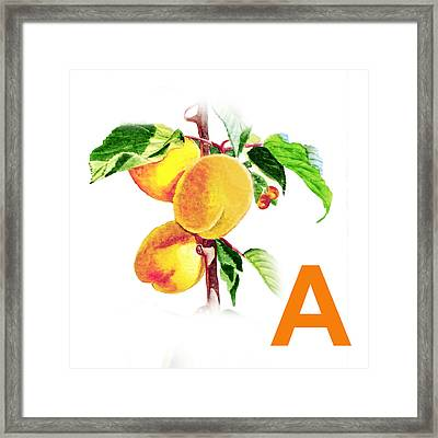 A Art Alphabet For Kids Room Framed Print by Irina Sztukowski