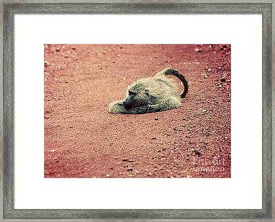 A Baboon On African Road Framed Print by Michal Bednarek