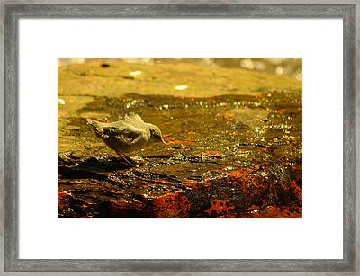 A Baby Dipper Framed Print by Jeff Swan