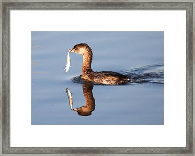 Framed Print featuring the photograph A Bad Reflection by Kathy Gibbons