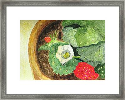 A Balcony Strawberry Plant Framed Print by Angela Davies