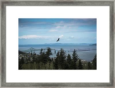A Bald Eagle  Haliaeetus Leucocephalus Framed Print by Robert L. Potts
