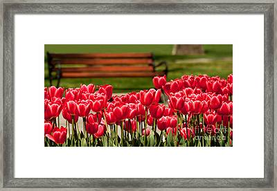 Watching The Spring Framed Print by Leyla Ismet