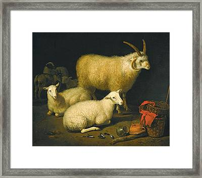 A Barn Interior With A Four-horned Ram And Four Ewes And A Goat Framed Print