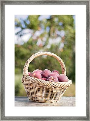 A Basket Of Freshness Framed Print