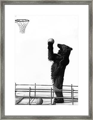 A Basketball Bear Framed Print by Underwood Archives