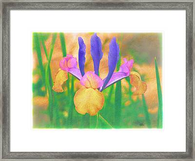 A Bearded Iris In My Vincent Van Gogh Garden Framed Print